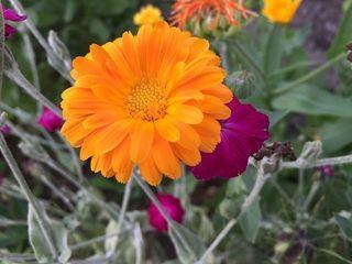 flower-1040478__480.jpg